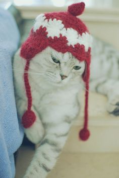A Kitty with a Knit Hat