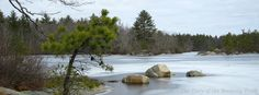 Deer Point on the Narragansett and #Yawgoog Yellow trails.  A 2013 image by David R. Brierley.