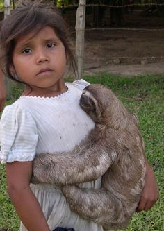 sloth babi, sloths, beauti babi, babi sloth, sloth hug