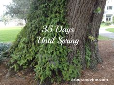 35 Days Until Spring!