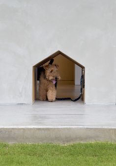 i will build my dogs this dog door one day.