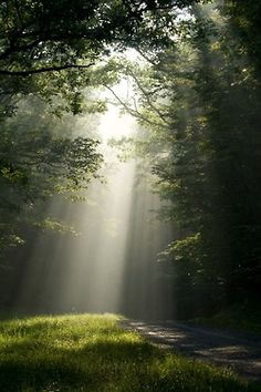 earth beauti, wist countri, tree, beams, forest, beauty, place, light, country