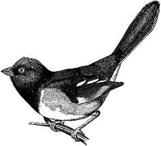 Free Vintage Digital Stamp - Cute Bird