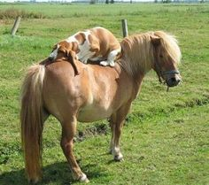 All I want is a basset and a pony :)