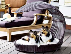 Doggie shaded bed