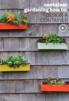 Container Gardening How-To: Design a Container