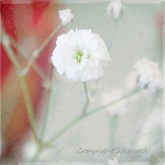 White Flower Photograph Elegant Romantic by KalstekPhotography, $25.00