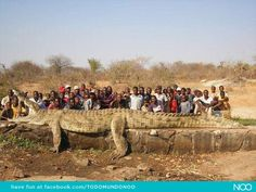 Mokele-mbembe anim, monster, crocodiles, hunt, funny photos, the village, africa, people, river