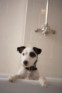 Save Money Monday from @PennySaverUSA .com. Dog grooming on a budget.