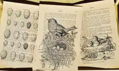 vintage altered book pages