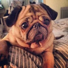 """""""Why are you getting up?!?!""""  So many worry wrinkles!!  \"""