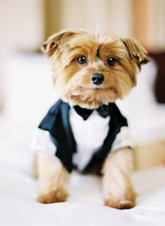 Pup in tuxedo| photo by Jonathan Canlas « Southern Weddings Magazine