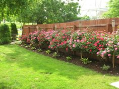 Our new fence WILL look like this.  We just ordered all of the plants yesterday!  Can't wait to beautify Castanea :)