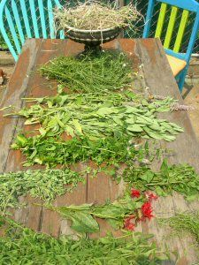 HARVESTING AND DRYING HERBS: