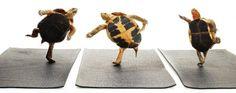 Dancing Turtles TurtleWingFoundation.org RIP sweet little Jack