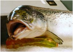Toxic salmon: Is it Europe's latest food scare