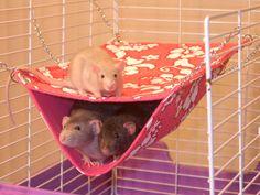 Гамак для крысы своими руками фото