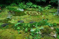 Annie's Moss Garden  Mountain Moss Enterprises - See lots more photos of moss gardens here!  www.mountainmoss.com