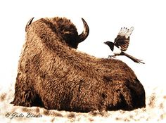 "Cleared for Landing (bison with magpie) by julie bender Pyrography ~ 12"" x 9"""