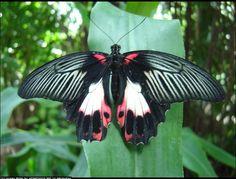 The Open Photo Project Butterfly by Jordan Miller | 12098.openphoto.net | Butterfly | butterflies, jordans, jordan miller, project butterfli, photo project