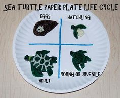 Sea Turtle Paper Plate Craft for Kids