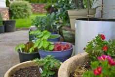 5 vegetable container gardening tips.