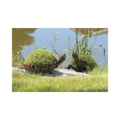 Oh these turtle topiaries are just TOO cute!