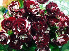 Flash Night rose from Potomac wholesale florist