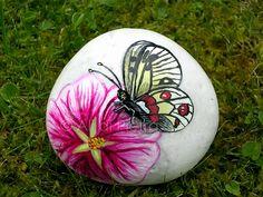 Parnassius apollo su fiore di malva