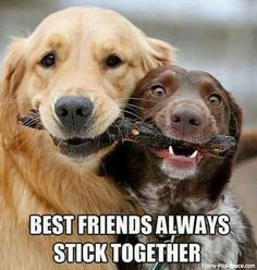 funny animals, stick, funny animal pictures, funny pictures, blond, friendship, puppi, dog, quot