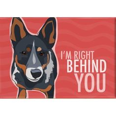 Love my Cattle dog mix, he's my shadow. More