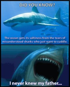 Omg!! Shark problems
