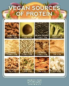 Plant sources of protein
