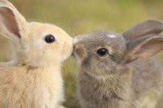 bunny love rabbit, a kiss, anim, valentine day, pet, bunni kiss, baby bunnies, easter bunny, friend
