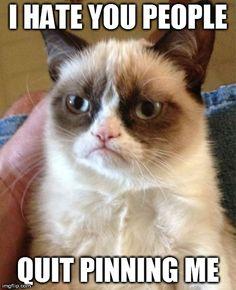 tard, anim, laugh, stuff, grumpi cat, funni, humor, grumpy cats, thing