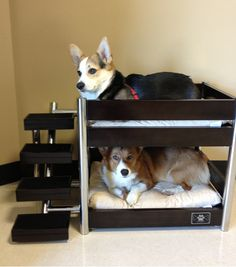This is so cute! Doggy bunk bed. #doghouse #dogs #corgi #ilovemydog