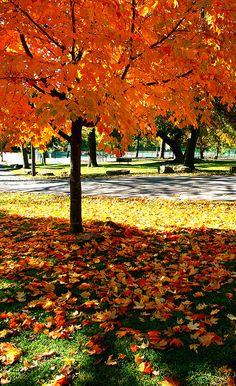 Fall foliage, Arkansas