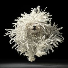 TIM FLACH'S INCREDIBLE PHOTOGRAPHS OF DOGS