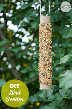 DIY Bird Feeder made with a paper towel roll and peanut butter! So easy!