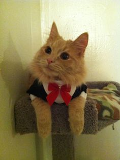 Tuxedo with fancy red bow cat clothes by Catclothing on Etsy, $11.00