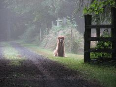 a golden welcome...awesome photo!