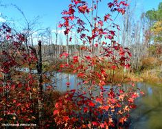 Fall colors along the American Tobacco Trail in North Carolina PullOverandLetMeOut.com