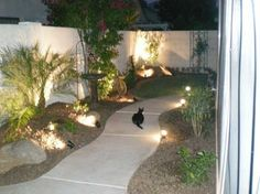 Arizona Tropical landscape design with sod, palm trees, plants, misting systems