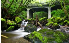 Oyster Creek - Bellingham, Washington