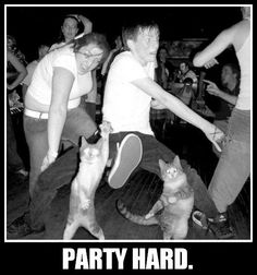cats, party animals, friends, cat party, beavers, parti hard, dance, brandy, cameras