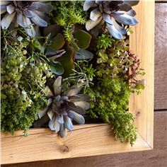 Reclaimed Wood Eco Living Wall (491563286), Planters & Terrariums