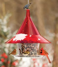 Should we take our feeders down in the Autumn? We are afraid that if we leave them out then the birds won't fly south. Is this true? - See more at: http://www.the-scoop-on-wild-birds-and-feeders.com/should-we-take-our-feeders-down-in-the-autumn.html#sthash.5iZcjiBu.dpuf