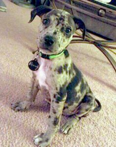 Catahoula....we love ours so much!!