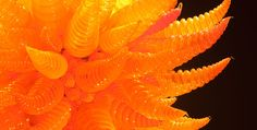 Macchia Forest by Chihuly. Chihuly Rediscovered at Colorado Springs Fine Arts Center until Sept. 28