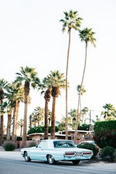 Palm Springs | TENDI
